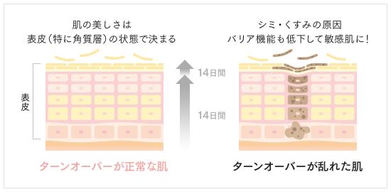 ターンオーバーが正常な肌とターンオーバーが乱れた肌の比較図
